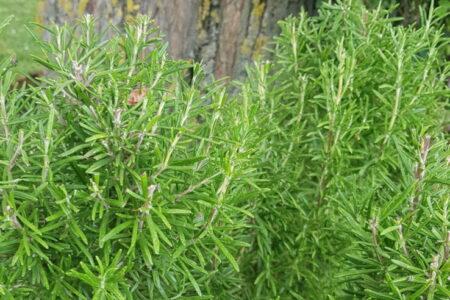 Trentamila le specie di piante commestibili. Quante ne mangeremo oggi?