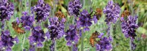 Le api ci giudicano! Proposte, misure ed incentivi per la nuova PAC