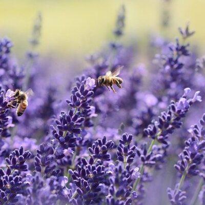 Il regalo di San Valentino della Valle d'Aosta alle api