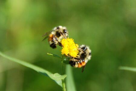 Uso sostenibile dei pesticidi: il richiamo della Corte dei Conti europea. Un preview sugli Impollinatori?