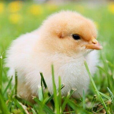 Animal Welfare: aperta la consultazione pubblica della Commissione UE sul benessere animale