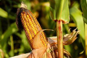 Prorogate al 2034 due sostanze per fitosanitari. Ecotossicologia e rischio per le api