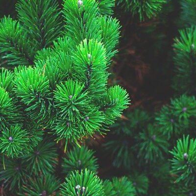Salute delle piante: prime schede digitali di sorveglianza fitosanitaria