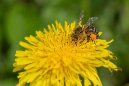 """Giornata mondiale delle api: """"C'era una volta, 100 milioni di anni fa,…"""""""