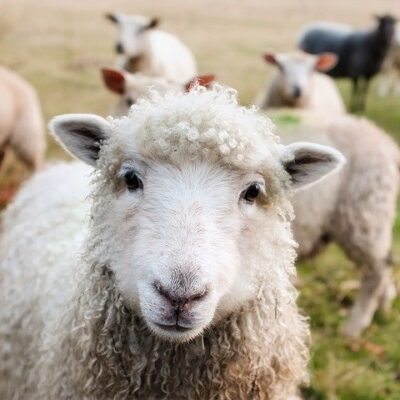 Benessere animale: roadmap per la valutazione della legislazione UE