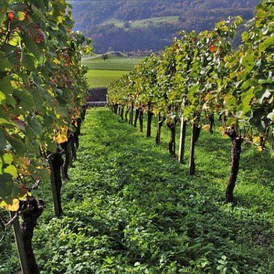 Decreto Rilancio: misure per imprese e famiglie. Il settore agroalimentare