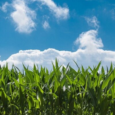 Esame preliminare per i testi unici dell'agricoltura