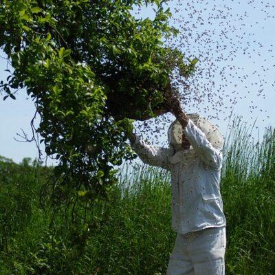 7 dicembre: Festa degli apicoltori e delle api