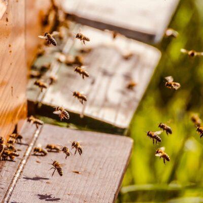 Fattori di stress nelle api: al via la consultazione pubblica